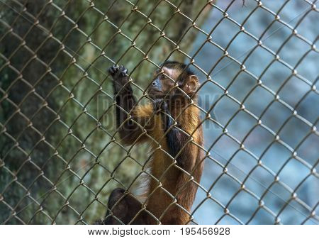 Monkey locked in a cage for help.animal in the zoo