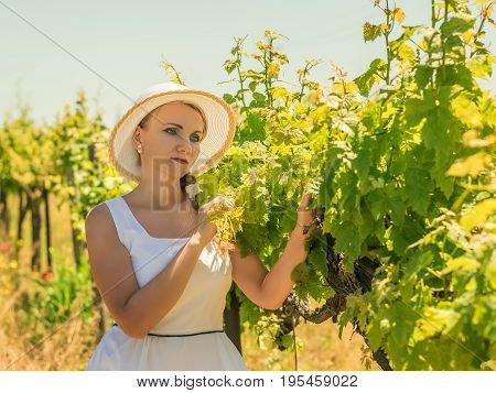 Beautiful woman in hat inspecting a field of grapes. Growing grapes in the southern country.