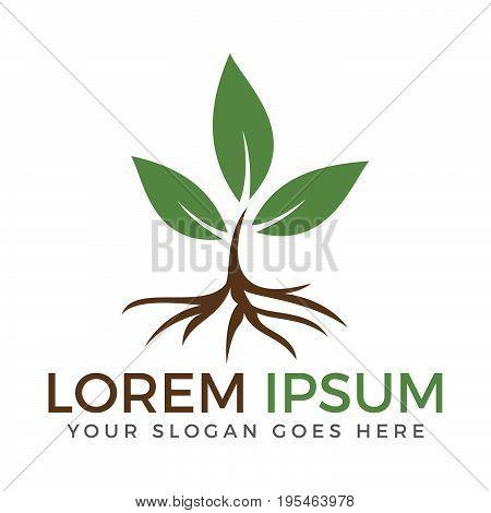 Green leaf ecology nature element vector logo. Leaf logo and abstract organic leaf logo.