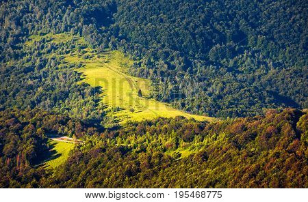 Hillside With Glade In Mixed Forest