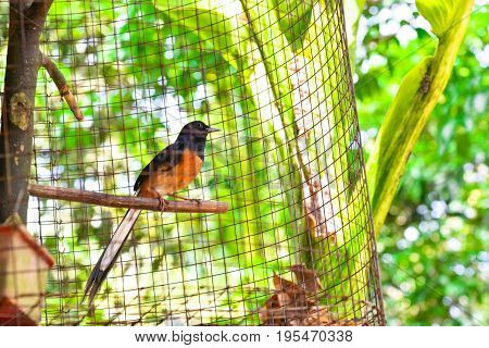 Red-whiskered bulbul Stand in the cageBirds in nick poster