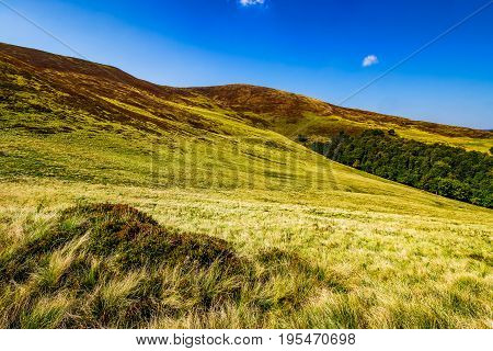 Grassy Hills On Late Summer Day