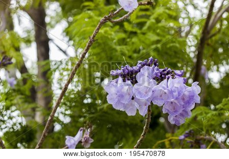 background, beautiful, big, bloom, blooming, blossom, botanical, botany, bouquet, branch, bud, bush, closeup, color, colorful, decoration, environment, flora, floral, flower, foliage, forest, fresh, garden, green, growth, inflorescence, leaf, natural, nat