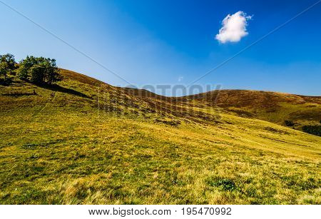 Few Trees On Grassy Hills In August