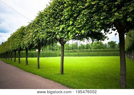 Alley of trimmed trees in antique The Catherine park, Saint Petersburg. Stylish geometric garden design. Perfect lawn. Summer, summertime. Tree forms. Beautiful landscape for prints, posters, design.