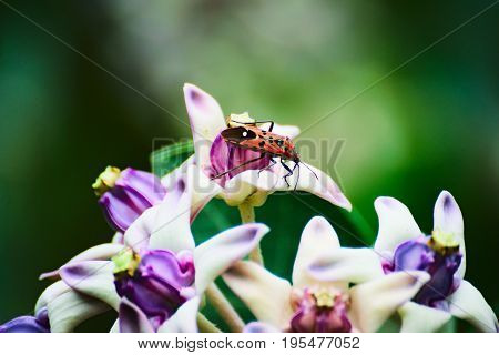 Pollination - a busy bug carrying pollens to flowers in a garden.