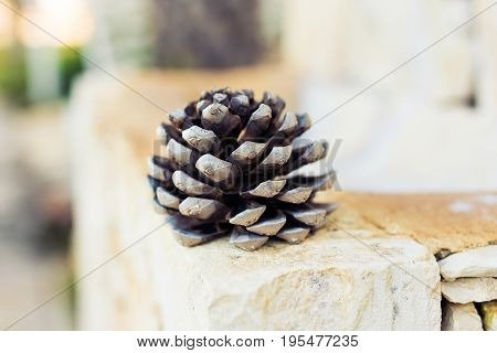 Pine Cone Close-up, brown fir tree cone