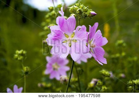Wildflowers. Wildflower Meadow. Flower Bouquets. Flower And Beautiful Petals