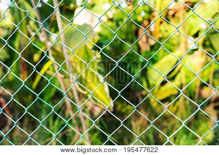 Wire fence with green grass on background. Garden green color grid fence