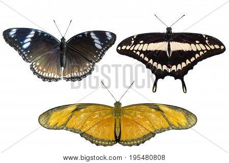 Real butterflies separate on white background - set 03