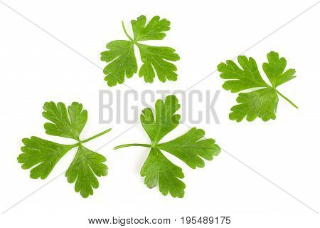 green parsley leaf isolated on white background. Top view.