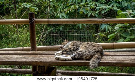 Sleeping cat on a wodden bench in the subtropical woodlands