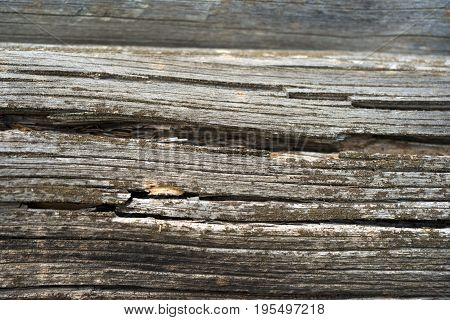 Texture Of Dark Wood. Natural Background.