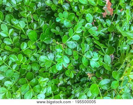 Closeup green leaf background in the garden