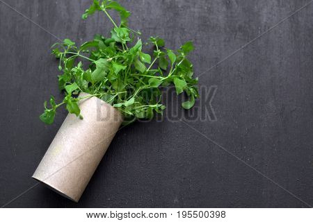 empty rolls of toilet paper with the plant inside as a seedling tree. Recycling ecology and conservative concept