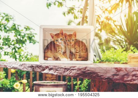 Cute little naughty yellow Domestic kittens hiding in foam container on wood table