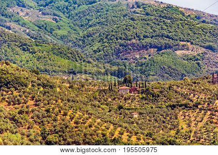Tuscan vineyard, surrounded by its vineyards and karteristic cypresses