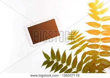 Styled natural eco home office. Tablet with copy space on white background. Product introducing Top view, flat lay. Copy space. still life. Sun flare