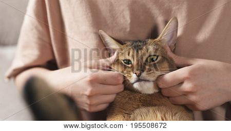 Teen girl with sad abyssinian cat on knees sitting on couch, wide photo