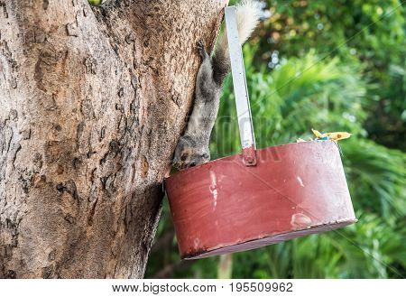 feeding squirrel, animal and pet in park