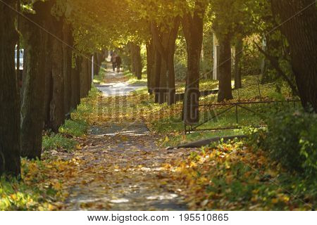 sidewalk in town with fallen linden leaves in october, autumn sunny photo
