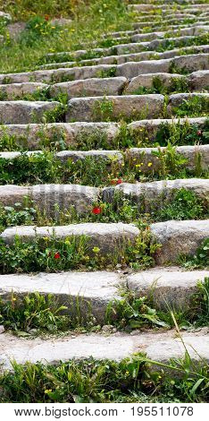 The Antique Abandoned Stairwais With Flower And Grass