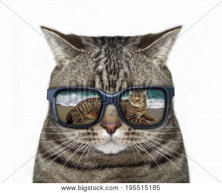 There is a pretty cool reflection in cat's sunglasses. White background.