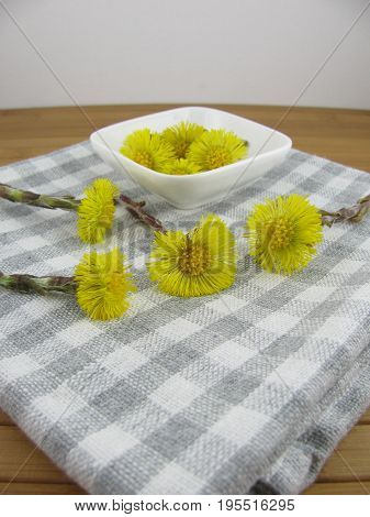 Freshly picked yellow flowers from young coltsfoot