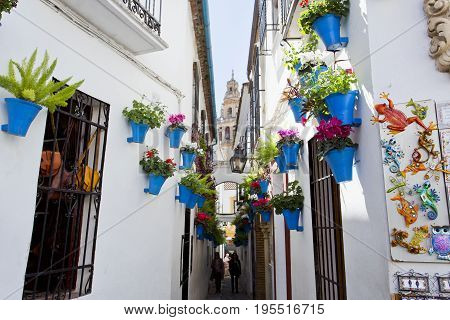 Flowers In Flowerpot On The White Walls On Famous Flower Street Calleja De Las Flores In Old Jewish