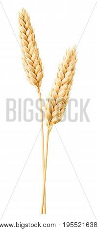 Isolated Wheat