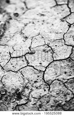 In The Desert The Dry Ground