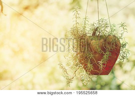 The common Purslane flower tree pot hanging on nature background.