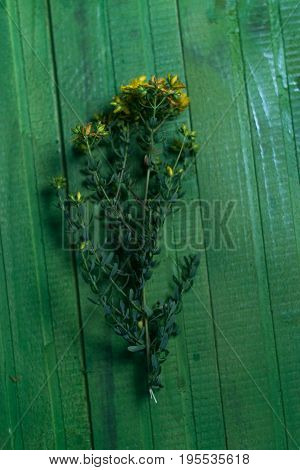 Yellow wildflowers on a wooden green background