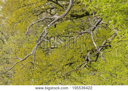 picture of a full frame abstract treetop background
