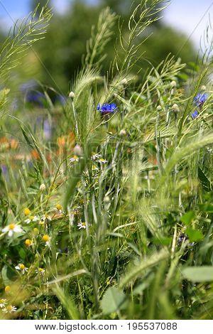 Details Of Wildflowers