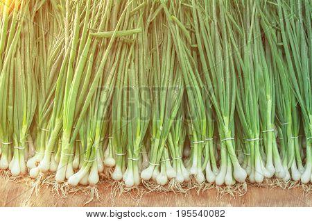 Fresh healthy bio leek on farmer agricultural market on morning sunny day