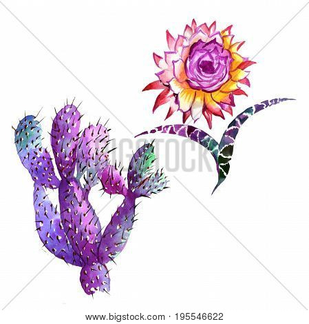 Wildflower cactus flower in a watercolor style isolated. Full name of the plant: cactus. Aquarelle wild flower for background, texture, wrapper pattern, frame or border.