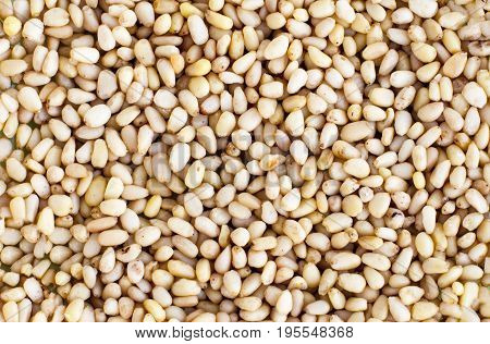 Many cores of pine nuts. Texture. Screensaver. Wallpaper.