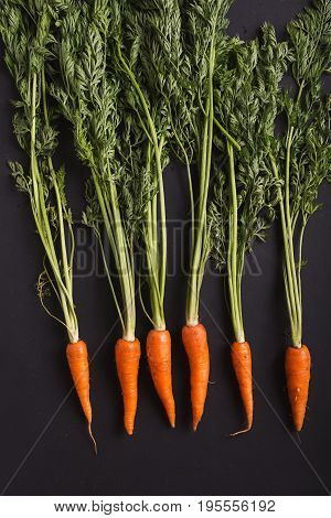A bunch of carrots. Carrots with stems. Carrots on a black background