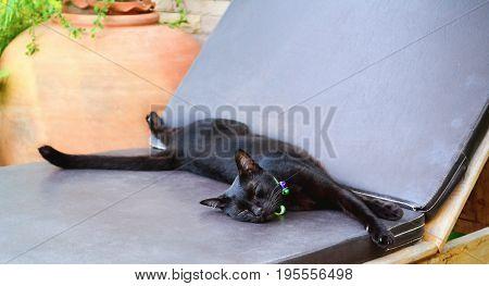 Small black cat sleeps on a deck chair.
