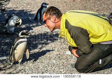 Tourists looking closely at a small, curious Magellanic penguin in Punta Tombo, Argentina
