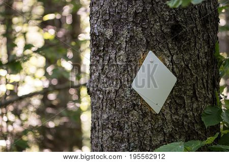 Diamond Trail Blaze on Tree marks the direction for hikers