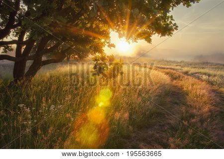 Landscape rays of sun through branches of tree. Beautiful scenery morning sunrise rays of sun through branches of tree in meadow in early autumn. Early colorful autumn and on foggy morning Solar glare