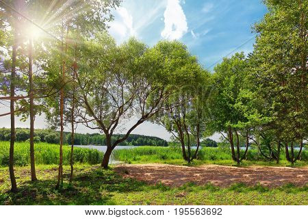 Bright summer landscape of green nature on lake on sunny day. Bright rays of sun through the green leaves of trees. Greenery is a beautiful spring. Bright sunny summer day in a park in the nature