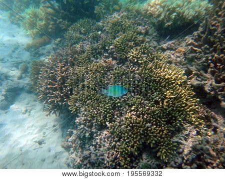 Sealife Of Doini Island, Papua New Guinea.