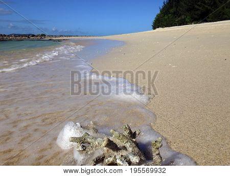 A Piece Of Coral On The Beach, Doini Island, Papua New Giunea.