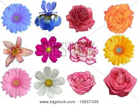 Flower heads isolated on a white background ( Full size in portfolio)