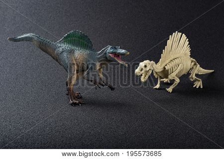 spinosaurus model and skeleton on a black background