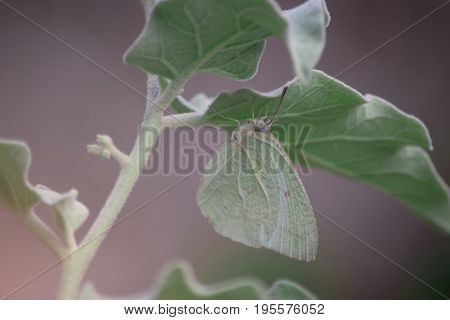 Green butterfly catches under green leaves with selective and soft focus.