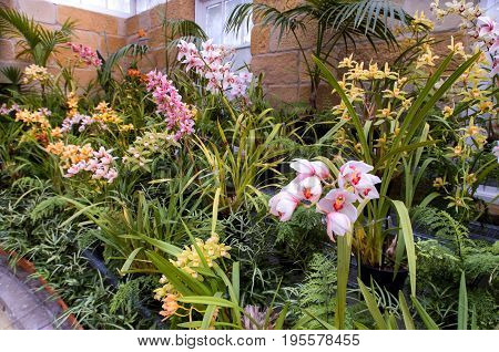 View of pink Orchids and other vegetation in a greenhouse